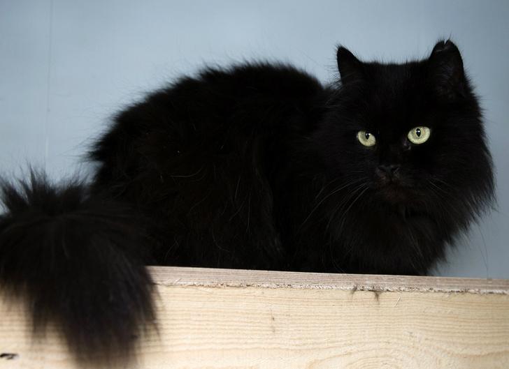 Фото №2 - Котопёс недели: кот Пушок и собака Ливадия