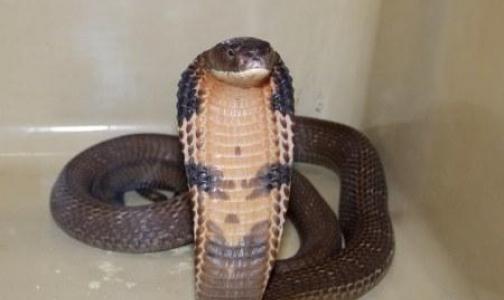 Фото №1 - Не дразните змею