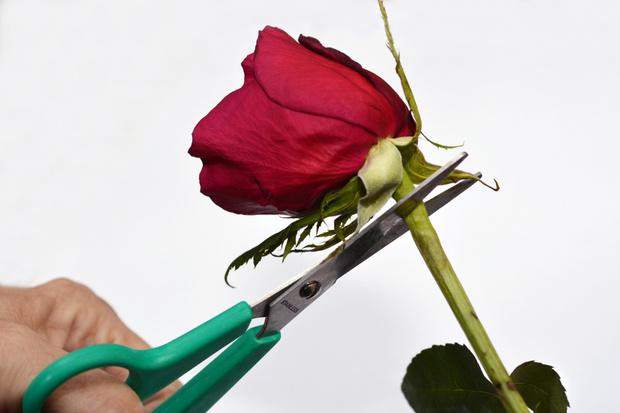 Фото №2 - Женское обрезание: кому и зачем его делают в 21 веке