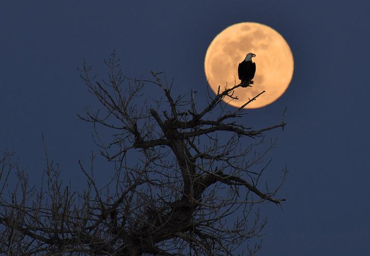Фото №1 - Беспощадный спутник: 7 странных земных явлений, которые происходят из-за Луны