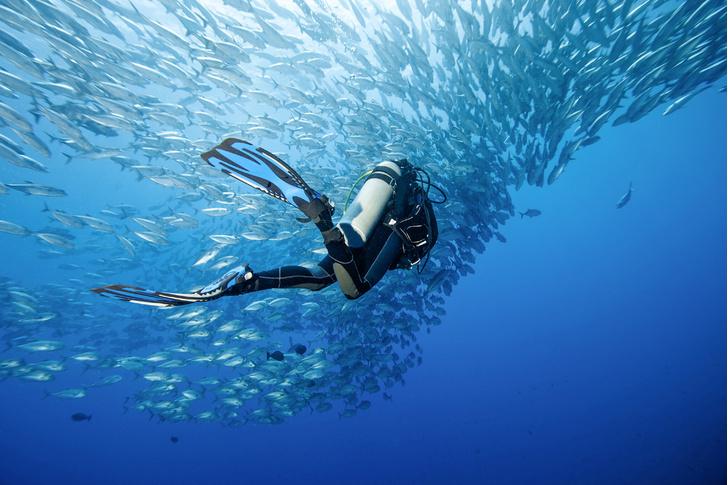 Фото №1 - Страдают ли рыбы от кессонной болезни при быстром всплытии?