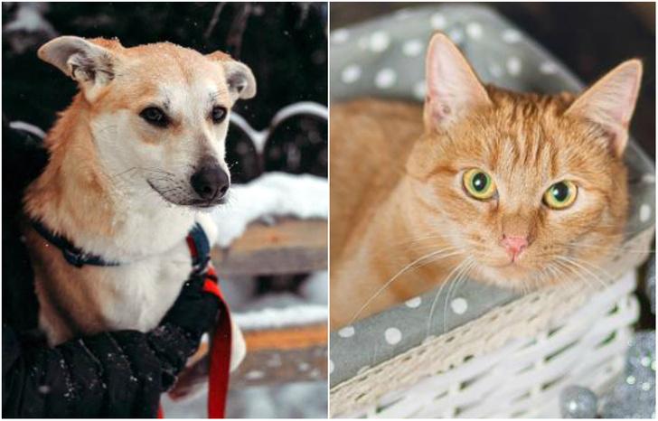 Фото №1 - Котопёс недели: пес Коржик и кошка Дайкири