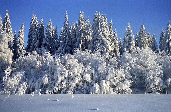 Фото №4 - Новый год на бывшей финской границе
