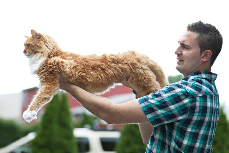 Фото №6 - Генетика: котенок от дизайнера