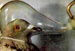 Фото №2 - Почему не заблудятся птицы?