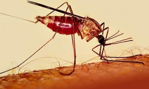 Фото №1 - Испытания вакцины против малярии показали блестящие результаты
