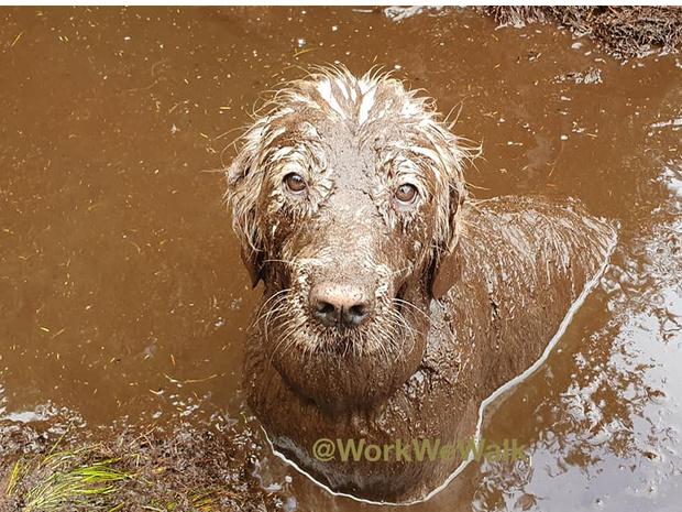 Фото №9 - Если собака без поводка: 15 фото песиков до и после прогулки