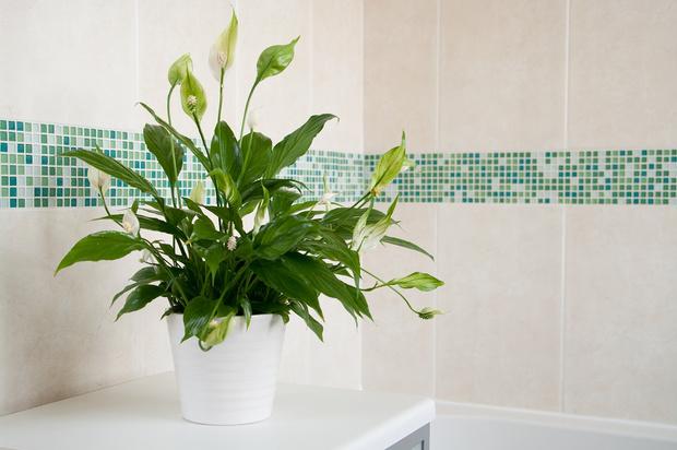Фото №2 - Кактус цветет к деньгам: как гадать на комнатных растениях