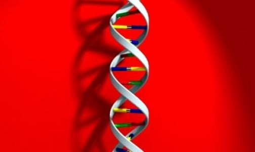 Фото №1 - Риск отторжения определят по донорской ДНК