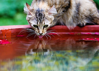 Фото №8 - Всемирный водопой