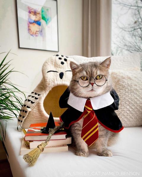 Фото №16 - Инста дня: Этот кот про моду знает больше, чем ты 😂