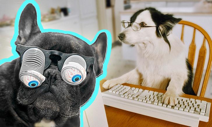 Фото №1 - Ученые назвали самые умные и самые глупые породы собак