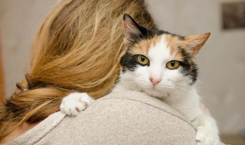 Фото №1 - Московские ученые заподозрили связь между развитием шизофрении и кошками
