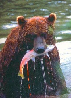 Фото №3 - Медвежья зона
