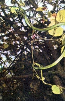 Фото №4 - В лесах Борнео