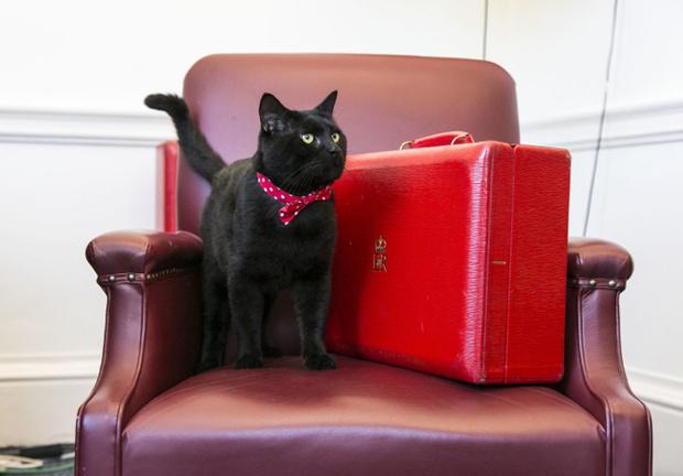 Фото №9 - Коты на службе Ее Величества