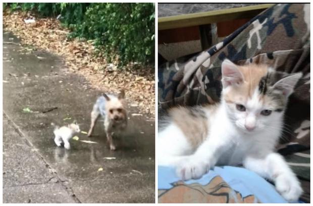 Фото №1 - Собака привела домой бездомного котенка и изменила его судьбу (видео)