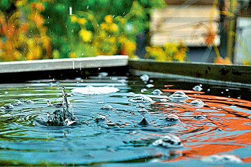 Фото №1 - Почему во время дождя на лужах иногда появляются пузыри?