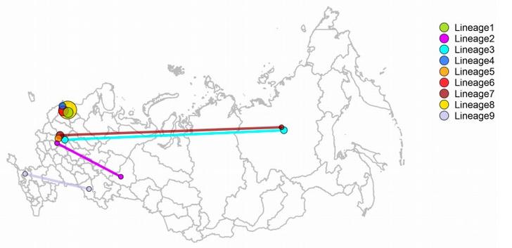 Фото №1 - Ученые выяснили, откуда SARS-CoV-2 попал в Россию