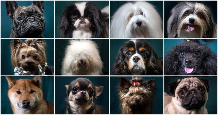 Фото №1 - Чем объясняется дружелюбие собак