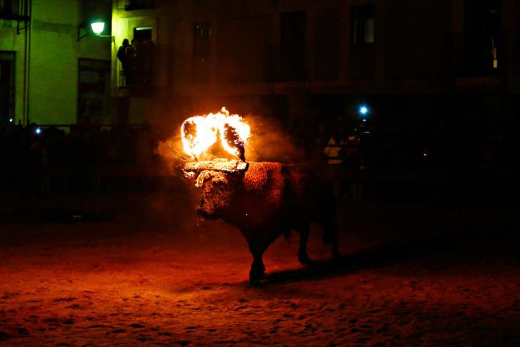 Фото №1 - Традиции: Испания. Торо Хубило