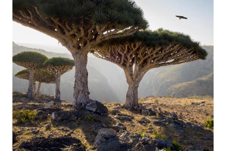 Фото №7 - Вернуться к корням: 7 самых экзотичных деревьев в мире