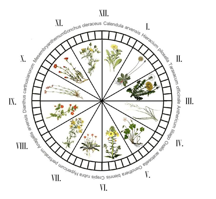 Фото №3 - Зеленые часы и барометры: растения, которые можно использовать как научные приборы