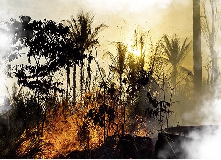 Фото №9 - Ого-гонь XXI века: еще 5 великих пожаров наших дней