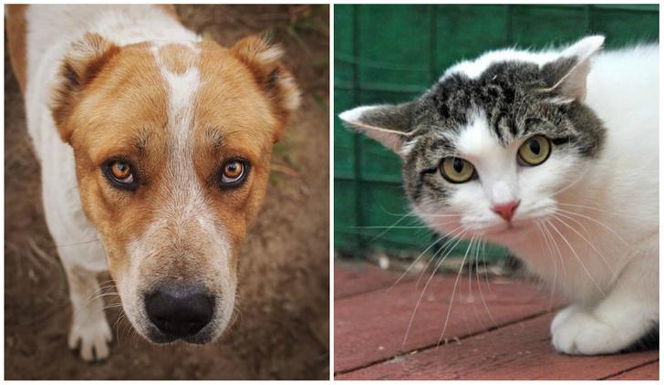 Фото №1 - Котопёс на карантине: кошка Мотя и алабай Артур ждут своих людей