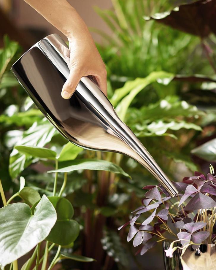 Фото №3 - Как освежить комнатные растения: 6 эффективных советов по уходу