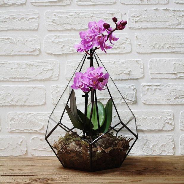 Фото №1 - Весенний флорариум с орхидеей: советы по изготовлению и уходу