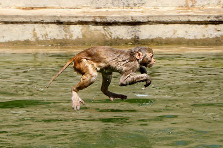 Фото №1 - Храм обезьян
