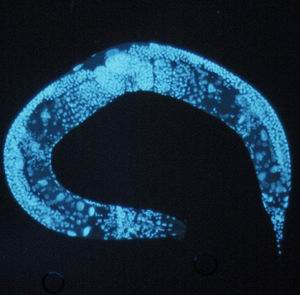 Фото №1 - Гены от рака