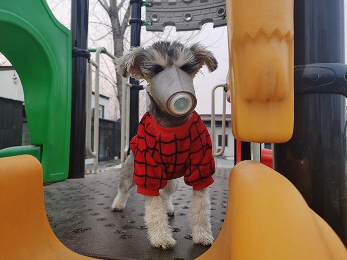 Фото №1 - В Гонконге выявлен первый случай, когда коронавирусом заразилась собака