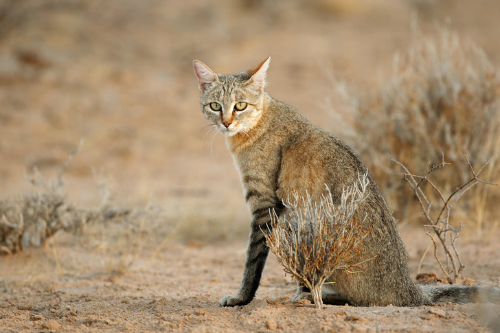 Фото №2 - Как кошки захватили мир