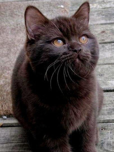 Фото №6 - Тест: Выбери черного котика и получи предсказание от Сабрины Спеллман