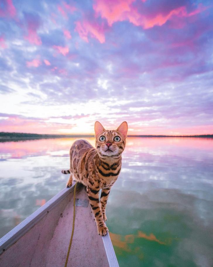 Фото №3 - Замурчательные компаньоны: коты-путешественники
