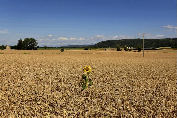 Фото №1 - Один в поле