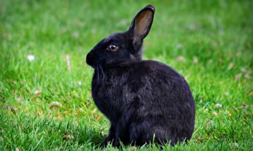Фото №1 - Новая версия ВОЗ: Барсуки и кролики могли стать виновниками пандемии коронавируса