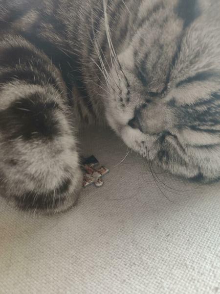 Фото №7 - Ни капли раскаяния: 30 страшных кошачьих преступлений— фото