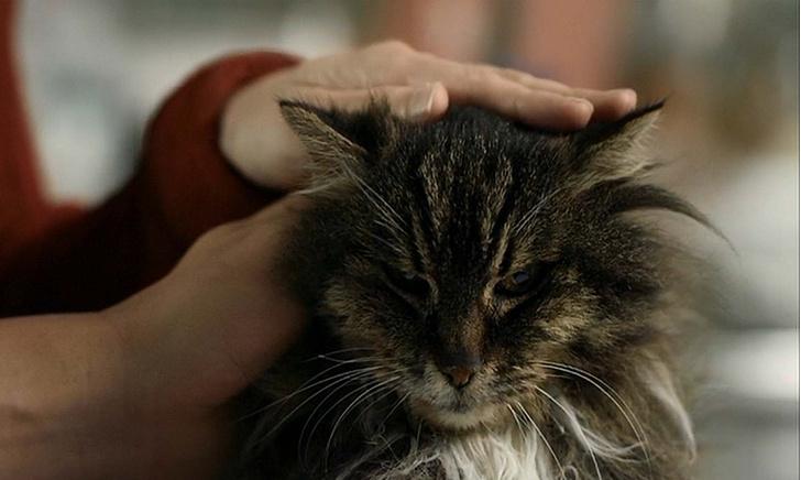 Фото №2 - 10 признаков, что твой кот счастлив