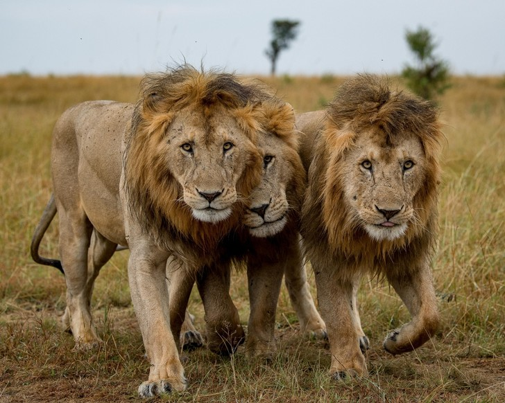 Фото №1 - Три брата