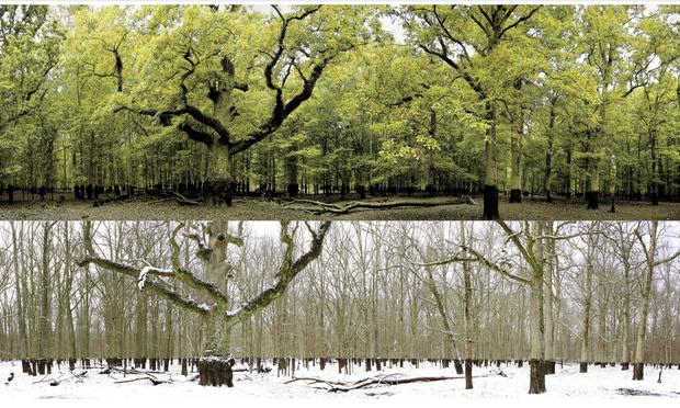 Тонущий пруд зимой и летом