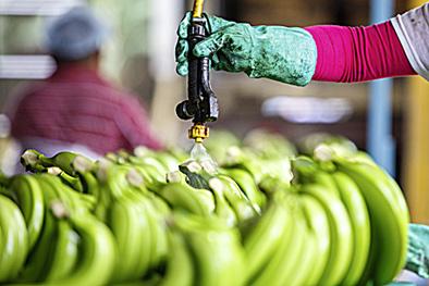 Фото №11 - Рабочий момент: банановый рай