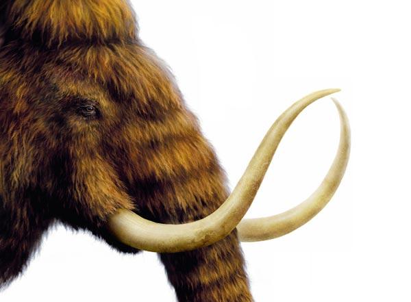 Фото №1 - Когда мамонты не были большими