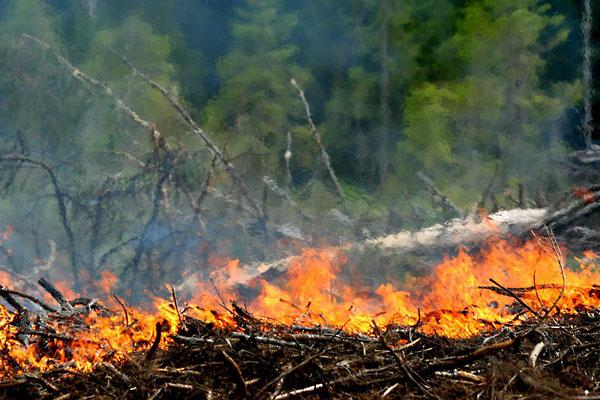 Фото №1 - Мокрыми штанами по лесному пожару