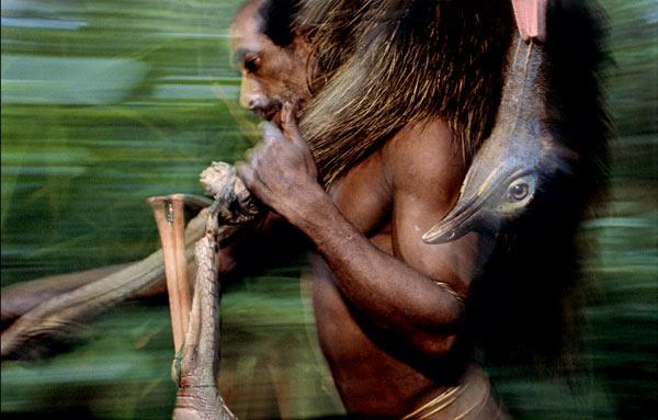 Фото №7 - Обитатели папуасских пентхаусов