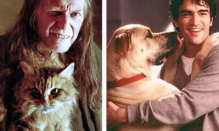 Фото №1 - Собачники vs кошатники: ученые установили, чем отличаются их характеры (не очень приятные новости для владельцев кошек)