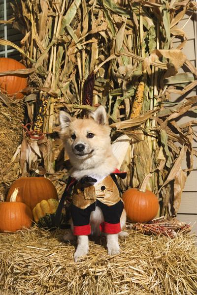 Фото №3 - Фотоподборка недели: собаки, которые уже готовы к Хэллоуину
