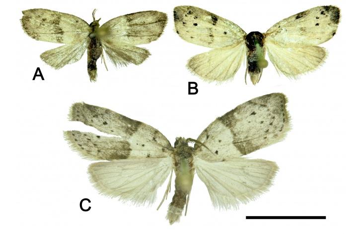 Фото №1 - На Дальнем Востоке нашли десять новых видов бабочек